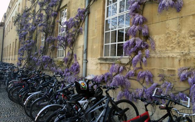 Bikes and wisteria, by Elizabeth Nye